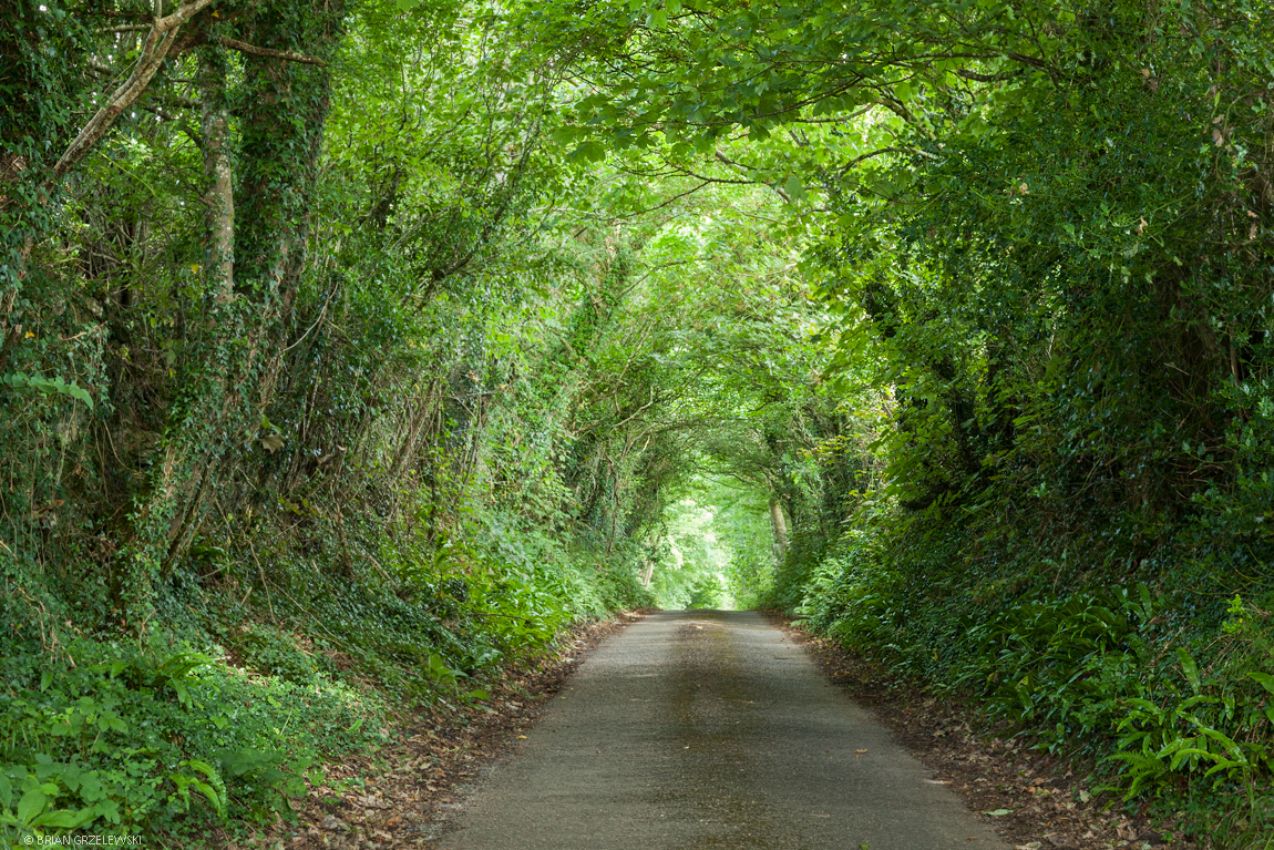 Tree-Tunnel-Road